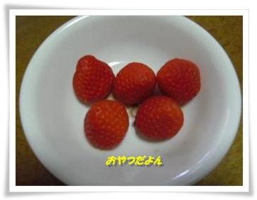 IMGP5464_20130320001427.jpg