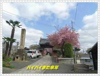 IMGP5585_20130321222646.jpg