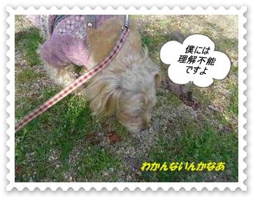 IMGP5779_20130325231814.jpg