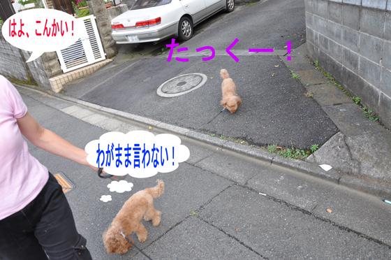 DSC_0021a_20100627235034.jpg