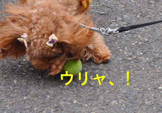 DSC_0024a.jpg