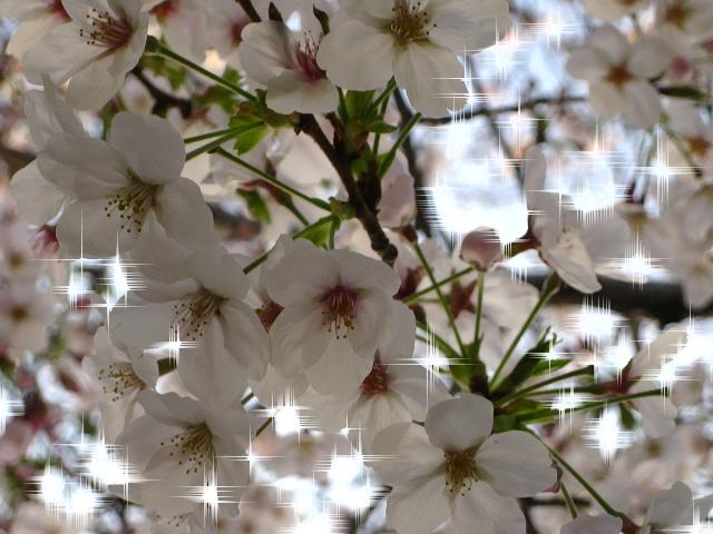 003_20100403200647.jpg