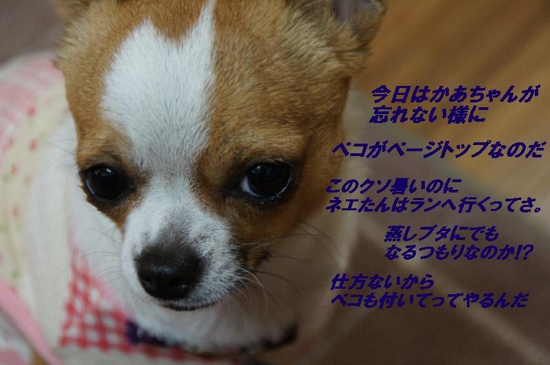 003_20100510173420.jpg