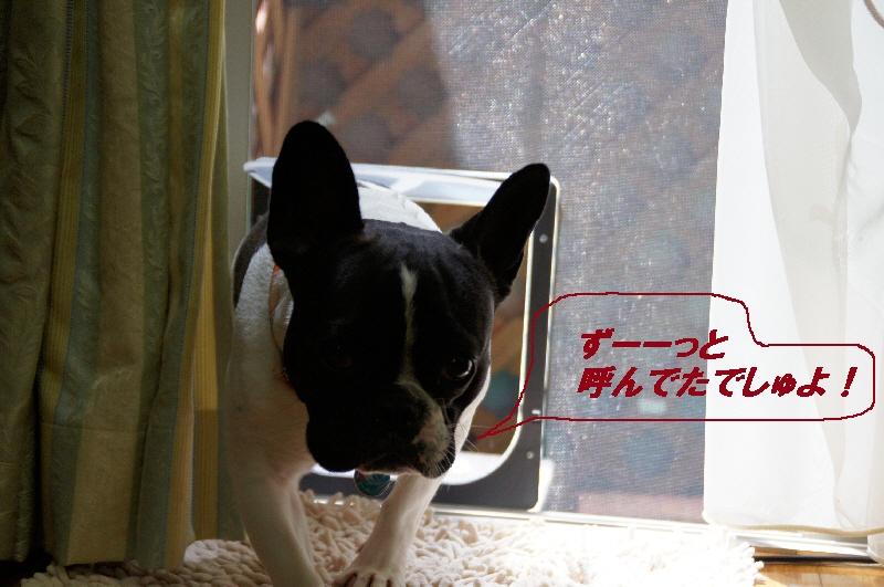007_20100520221527.jpg
