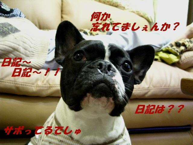 022_20100416155549.jpg