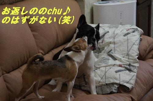023_20100114185059.jpg