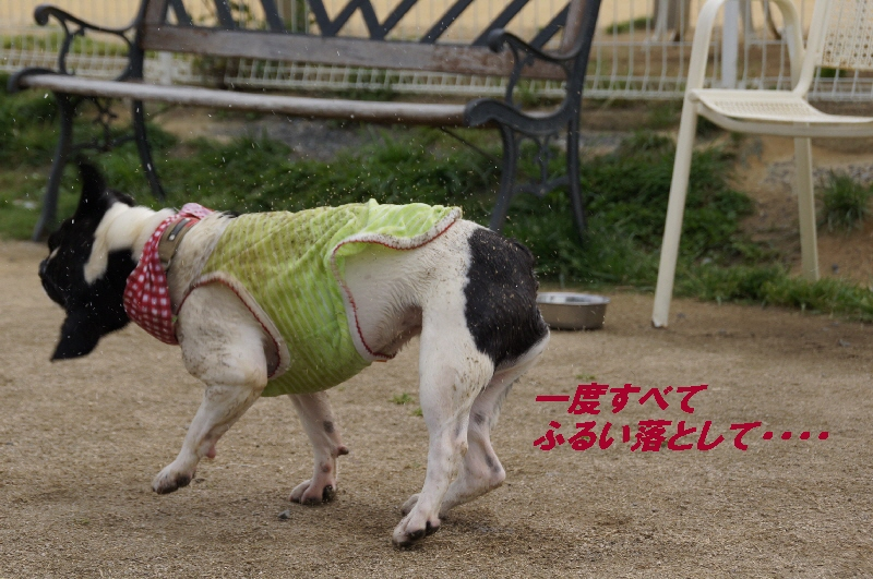 052_20100510173754.jpg