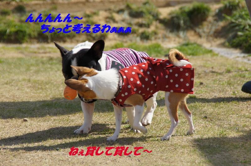 15_20100407162644.jpg