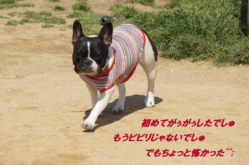 15_20100426093453.jpg