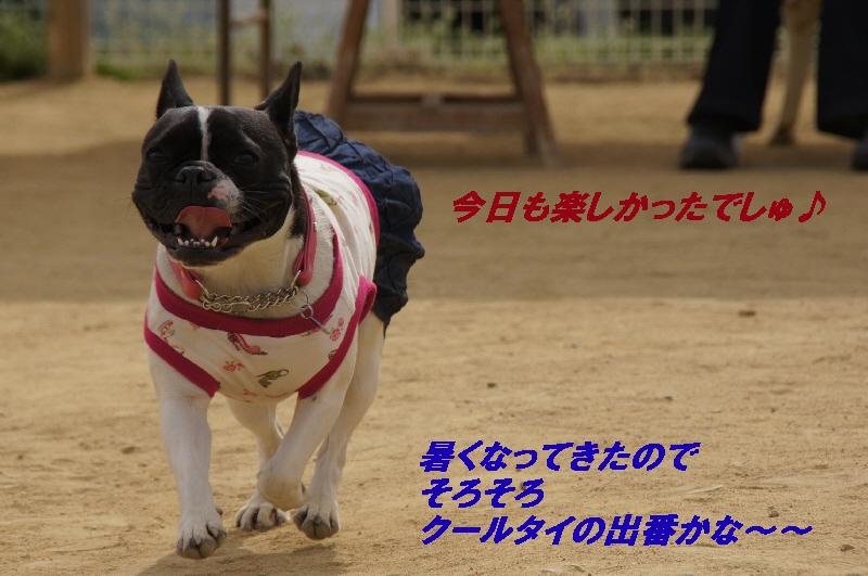 17_20110418215756.jpg