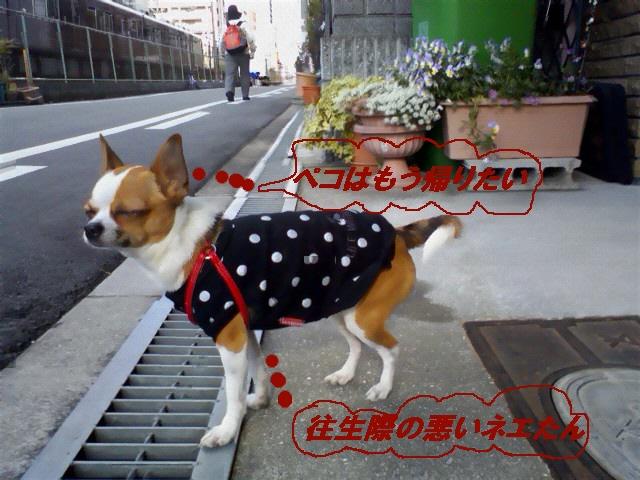 4_20100514202348.jpg