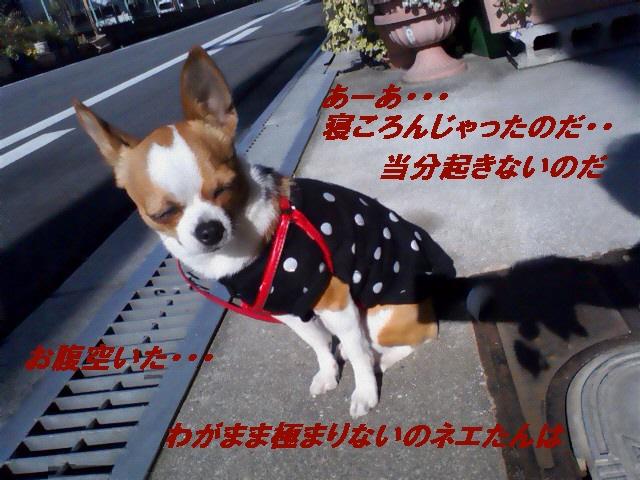 7_20100514202412.jpg