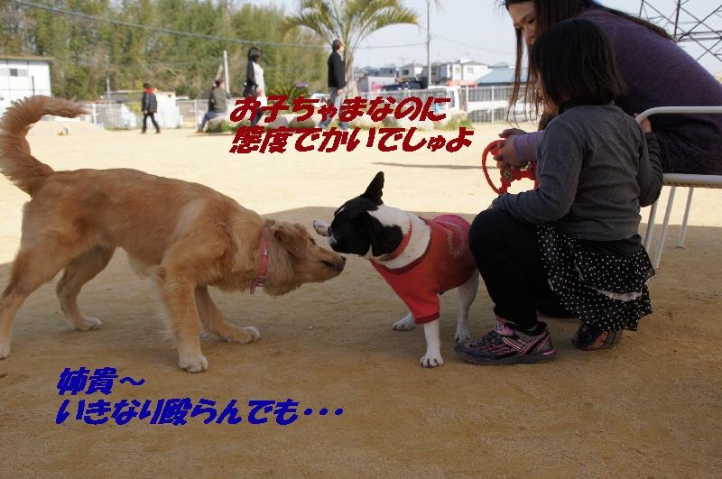 9_20100405140837.jpg