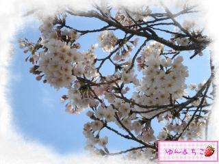 ちこちゃん日記★121★お花見したよ。-5