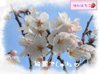 ちこちゃん日記★121★お花見したよ。-3