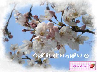 ちこちゃん日記★121★お花見したよ。-2