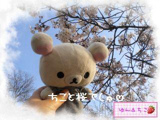ちこちゃん日記★121★お花見したよ。-6