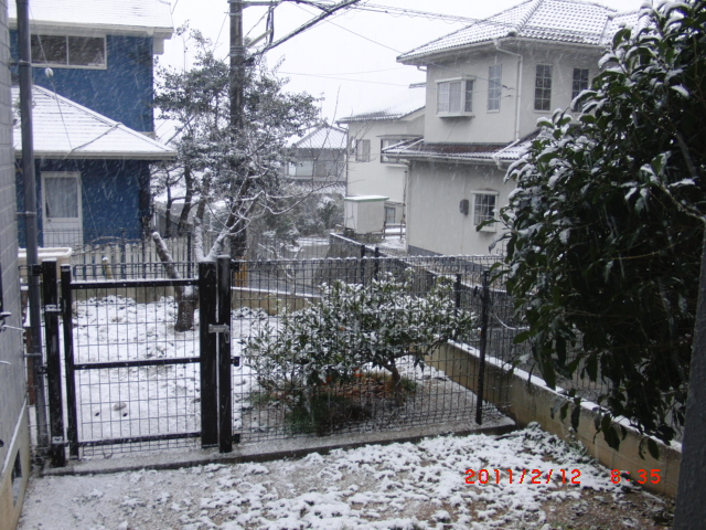 2011.02.11.3