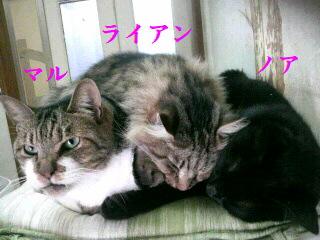 3匹猫団子