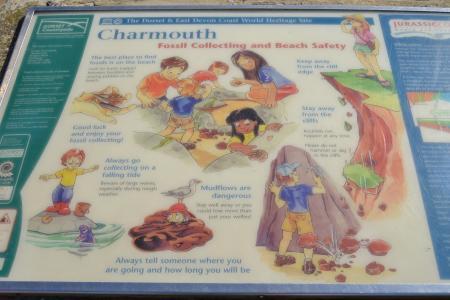 charmouth2.jpg
