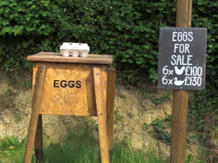 eggstand.jpg