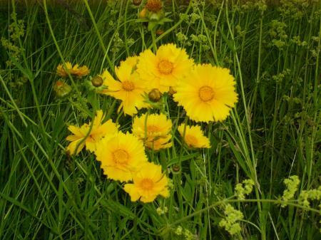 夏の花_convert_20110710040631