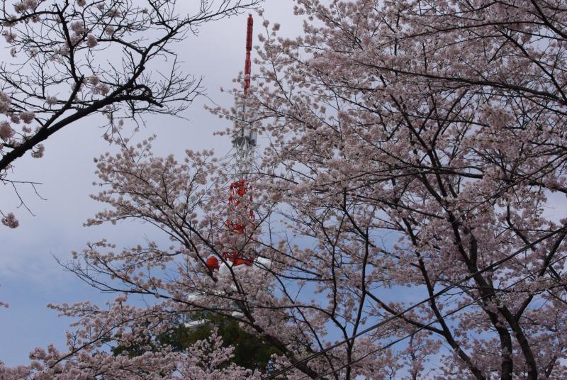 桜満開の花見♪