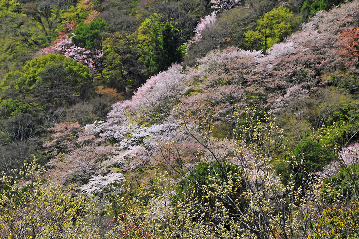 _DSC嵐山21