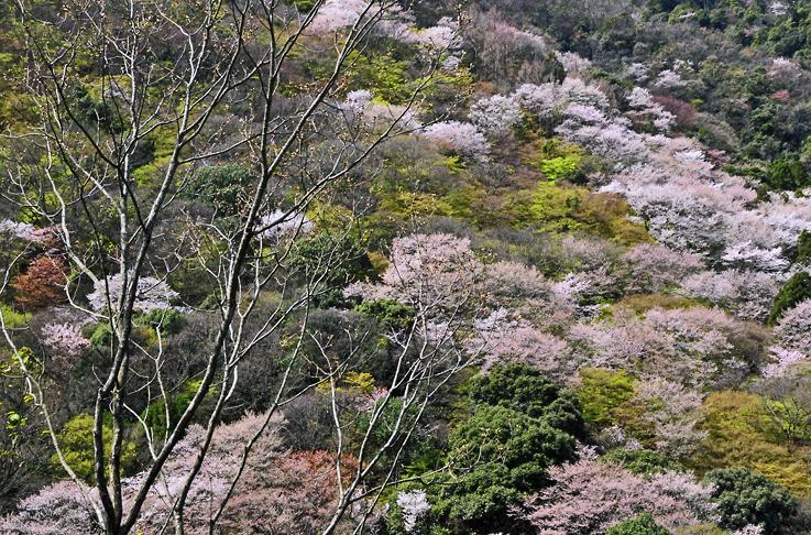 _DSC嵐山24