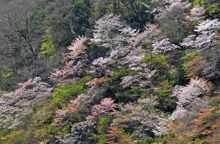 _DSC嵐山23