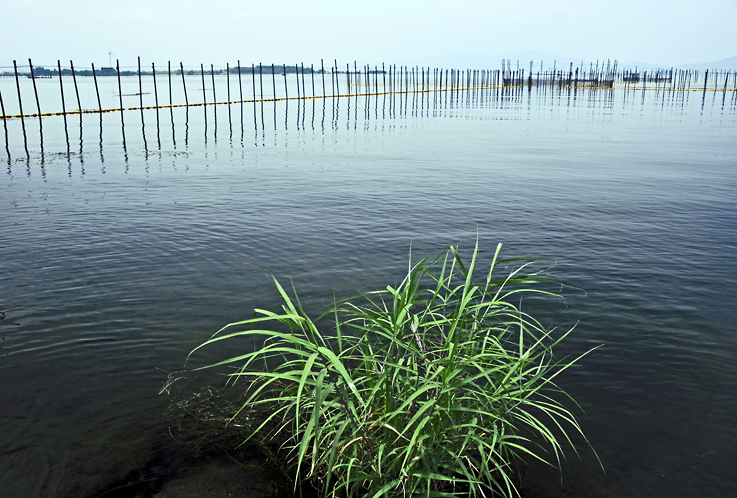 琵琶湖夏01