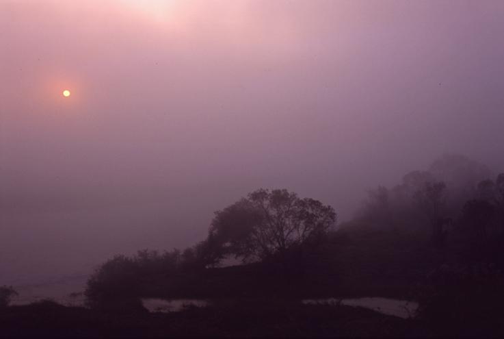 霧の朝(木津川)05b