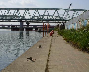Tone_river_Obori_052.jpg
