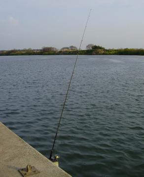 Tone_river_Obori_054.jpg