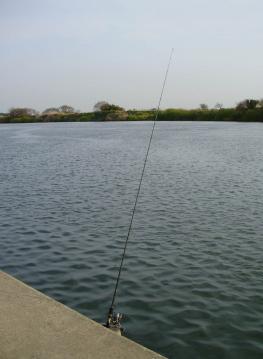 Tone_river_Obori_056.jpg