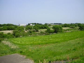 edo_river_saitama_03.jpg