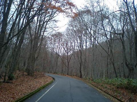 博士山ブナ林8;分断国道401