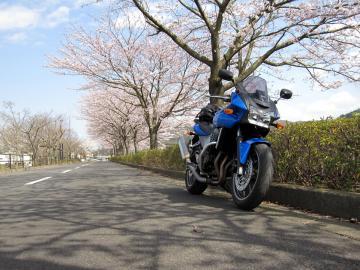 sakura1004007.jpg