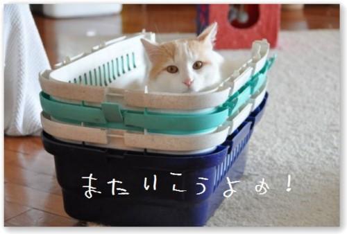 zukko carry1