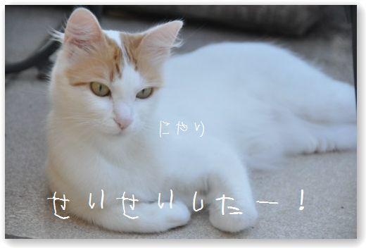 DSC_0606 (3)