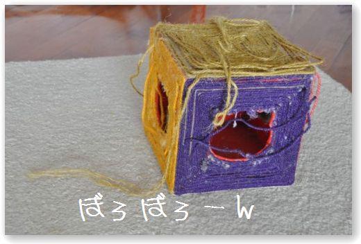 DSC_0760 (2)