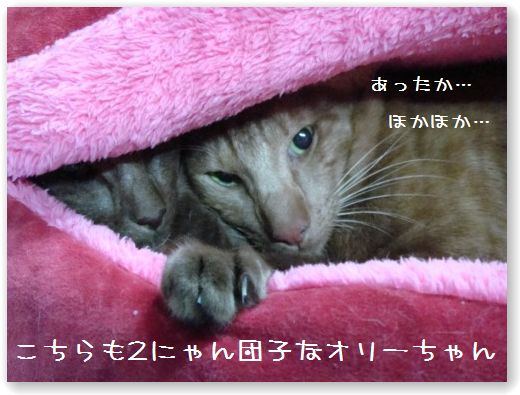 DSC07621.jpg