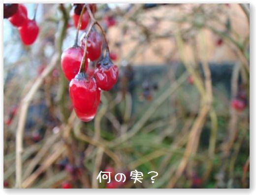 DSC08137.jpg