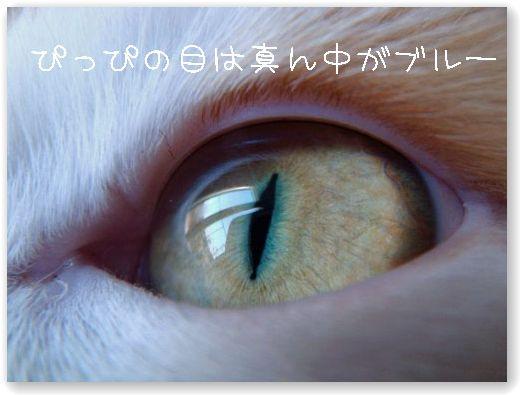 DSC08580.jpg