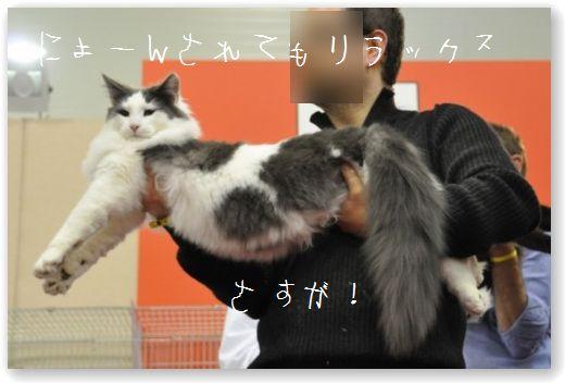 DSC_0018_20101126201210.jpg