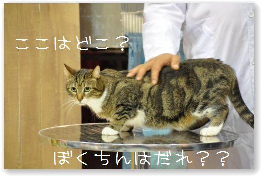 DSC_0039_20100525054700.jpg