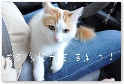 DSC_0068_20100524071715.jpg
