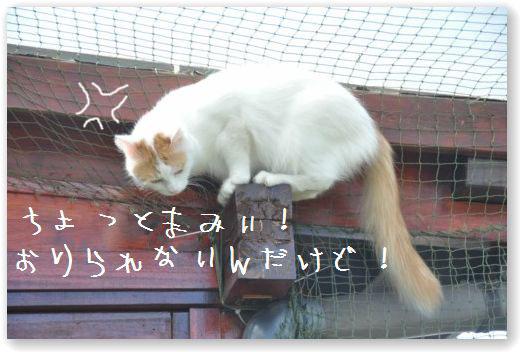 DSC_0224_20100627232807.jpg
