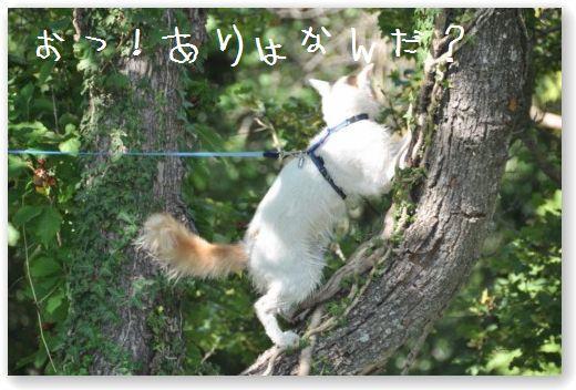 DSC_0245_20100828045646.jpg