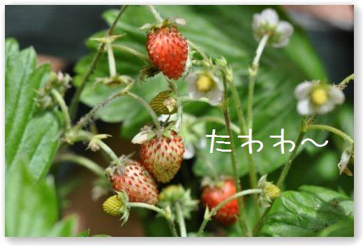 DSC_0461_20100601011130.jpg
